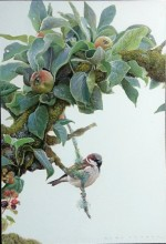 apple leaves and sparrow
